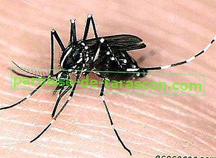 Mücken Anziehen