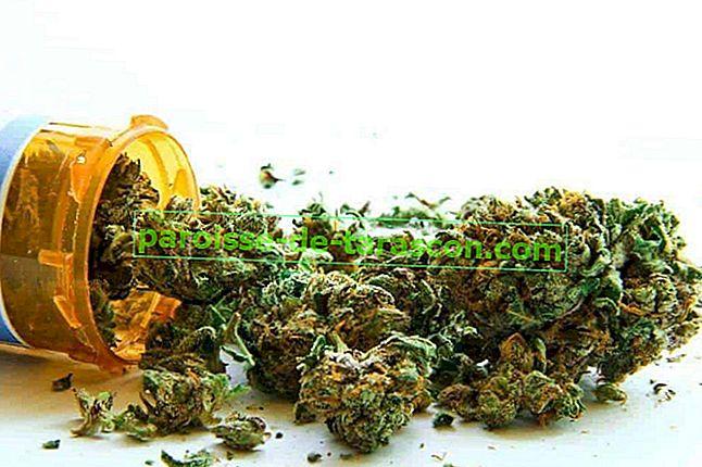 marijuana pentru a pierde in greutate